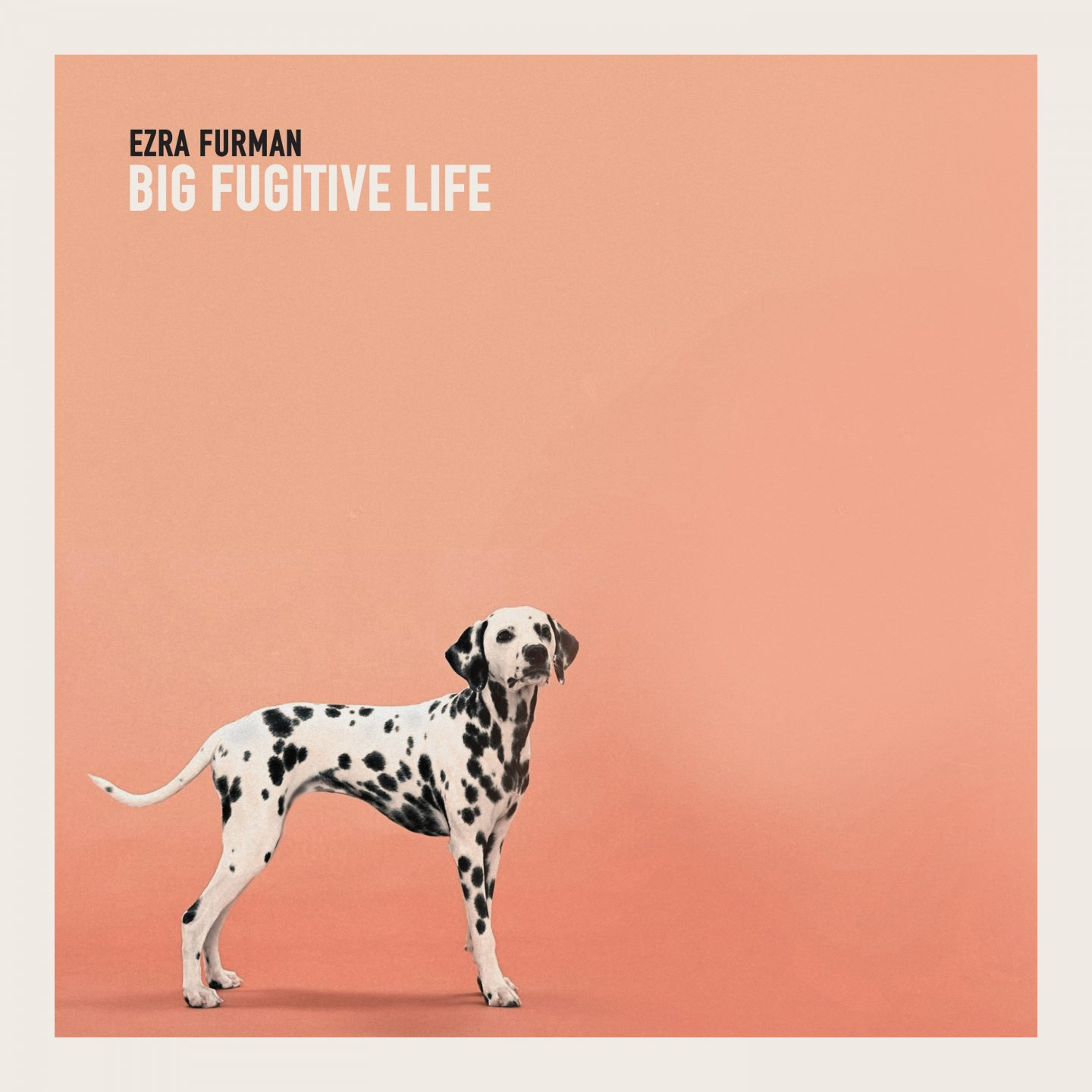 Image result for ezra furman big fugitive life vinyl art